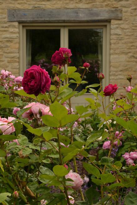 024_roses